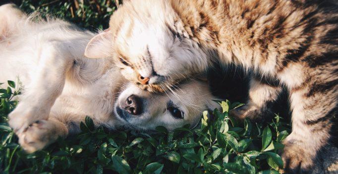 Le 20 février, au Royaume-Uni comme aux Etats-Unis, c'est la journée nationale de « l'amour de votre animal de compagnie ».