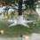 Aux USA, on célébre la chute des aiguilles du sapin de Noël mais pas que…